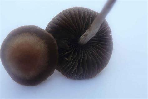 Pilze Im Garten Giftig Für Kinder by Hilfe Und Pilze Im Garten Pic