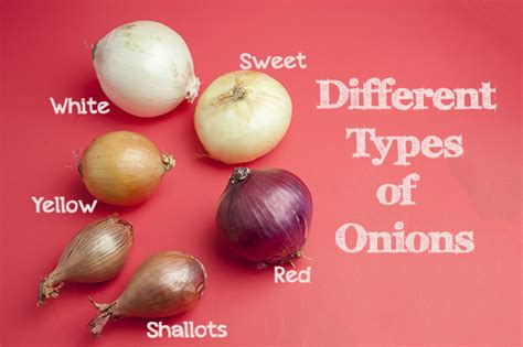 different types of onions 171 fresalina cooking