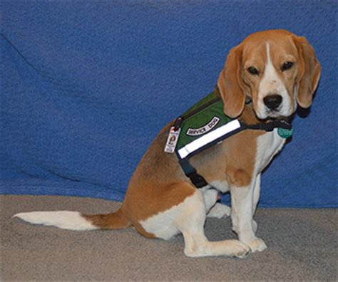learn to service dogs 187 the imperfect service