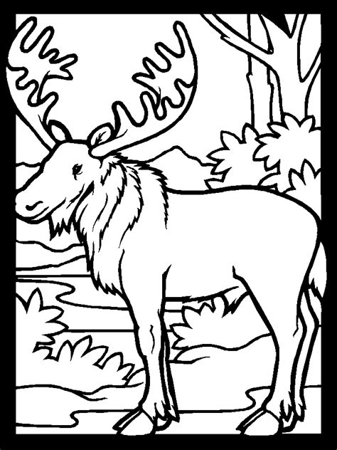 coloring book pages moose moose coloring pages for kids coloring home