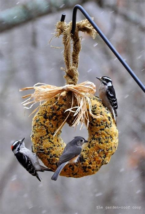 rebecca s bird gardens blog diy suet wreath