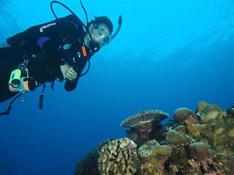 dive cook islands scuba diving aitutaki the cook islands scuba diving