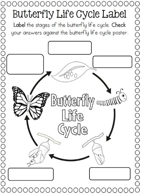 Cycle Of A Butterfly Worksheet For Kindergarten by 174 Best Images About Cycle Science Ideas On