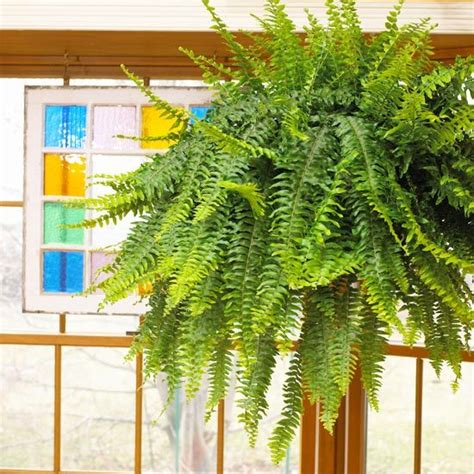 Plante D Appartement D Origine Tropicale by Easy Houseplants To Grow Green And Garden