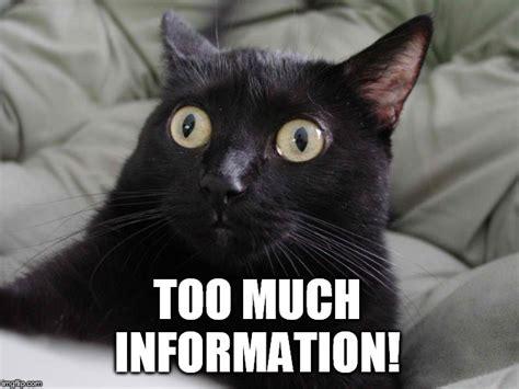 Meme Info - startled cat imgflip
