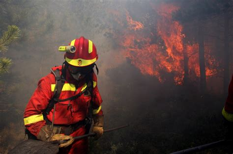 bilder nadelbäume la unidad aerom 243 vil de la ume atacar 225 los incendios
