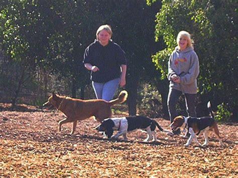 central park puppies city of huntington ca central park park