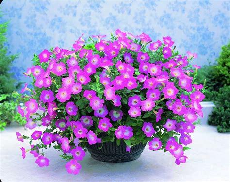 fiore con la z fiori e piante dalla a alla z piante appartamento