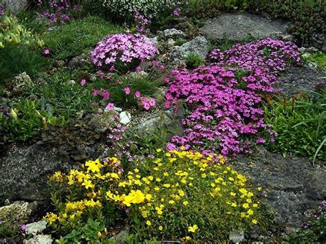 Rock Garden Plant Things You Need To About Rock Garden Plants Beabeeinc