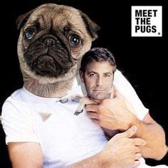george clooney pug pugs and their on pugs tyson beckford and rob