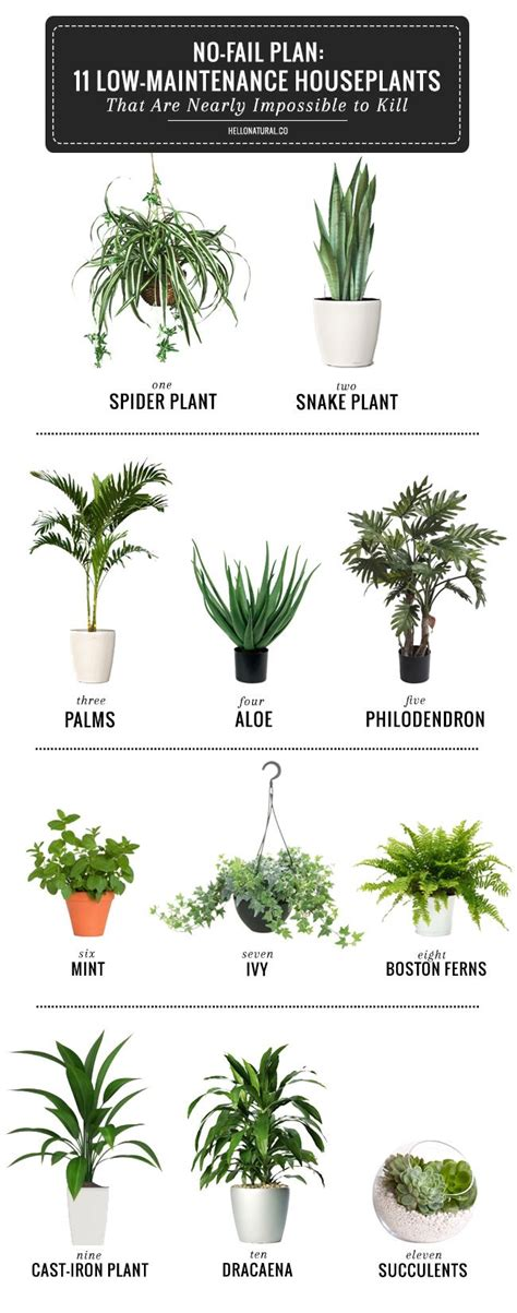 types of indoor plants best 25 plants ideas on plants indoor cacti