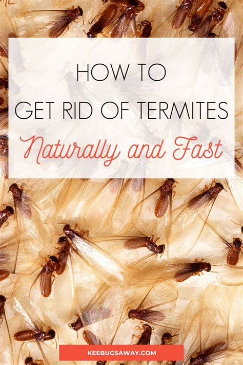 What To Do When You Find Termites
