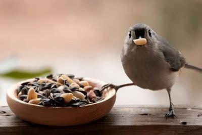 cultivar alimento  aves la huerta de ivan