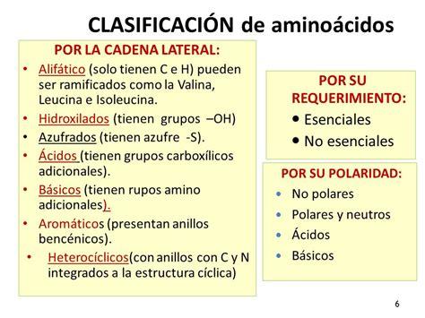 clasificacion de los aminoacidos segun sus cadenas laterales amino 225 cidos y p 233 ptidos ppt video online descargar