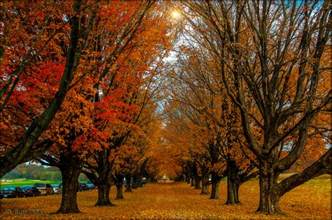 colorful trees a colorful row of trees baltimore landscape photographer
