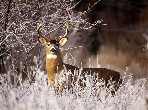 animals in the winter deer hunting wallpapers wallpaper cave