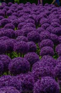 why is it called the color purple 25 best ideas about the color purple on the