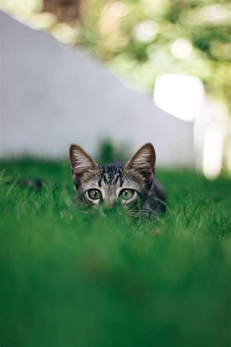 come allontanare i gatti dal giardino come scacciare i gatti dal giardino come eliminare i