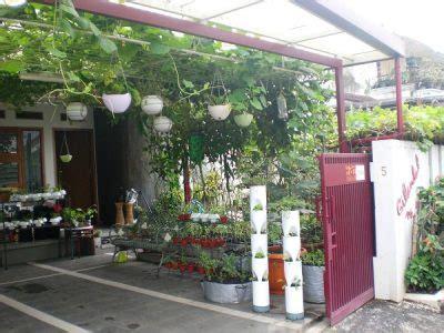 menanam tanaman sayuran  mudah  rumah