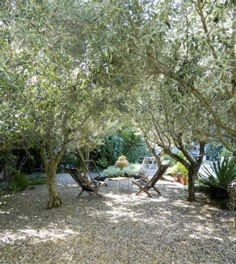 125 best gardens of olive lavender rosemary images on