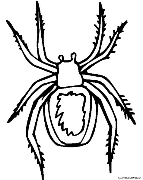 coloring pages black widow spider spider coloring pages getcoloringpages com