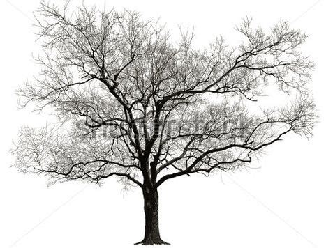 Trees That Shed Their Leaves In Winter 7 best images of winter tree without leaves creepy forests at tree without leaves