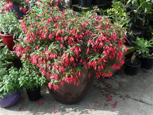 Best plants for Balcony Garden
