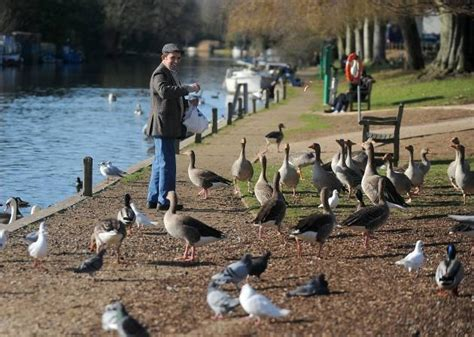 photo gallery bird lovers told not to feed the ducks at