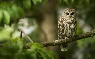 owl tree owl wallpaper 2560x1600 40774