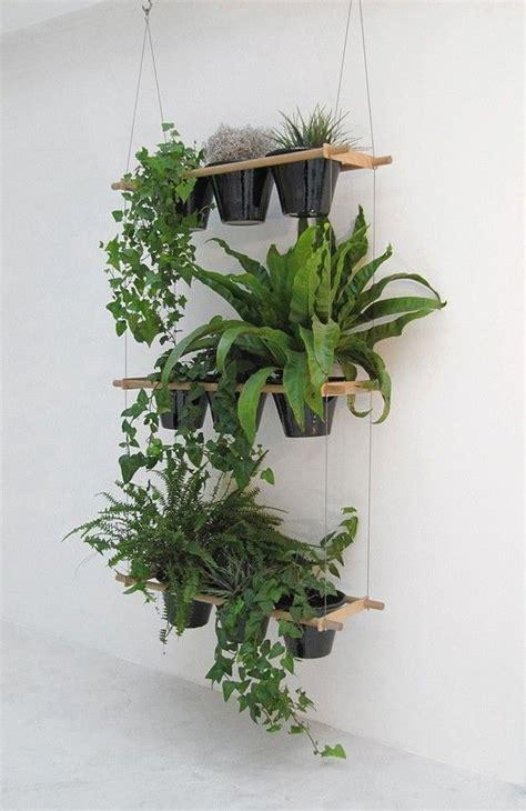 plant wall hangers indoor hanging indoor plants 27 awesome indoor houseplants to