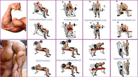 best bicep workout program to guarantee the biceps
