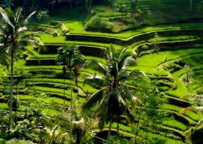 Hanging Gardens Ubud kintamani volcano tour bali holiday bali tips for