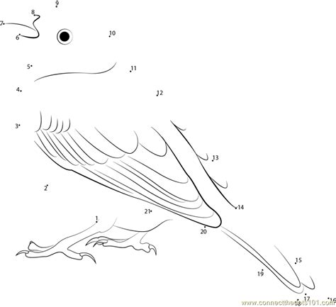 yellowhammer coloring page yellowhammer bird coloring page coloring pages