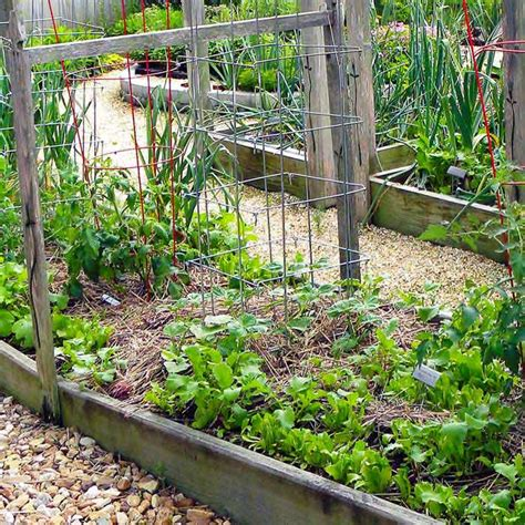 South Central Gardening What Crops To Grow In Oklahoma Vegetable Gardening Oklahoma