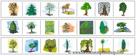 montessori tree printable tree cutting strips montessori practical life materials