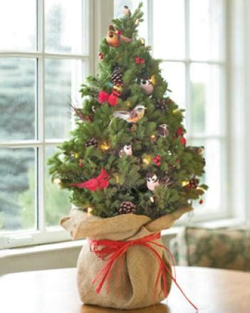 live decorated trees amaryllis in green eco pot gardening catalog