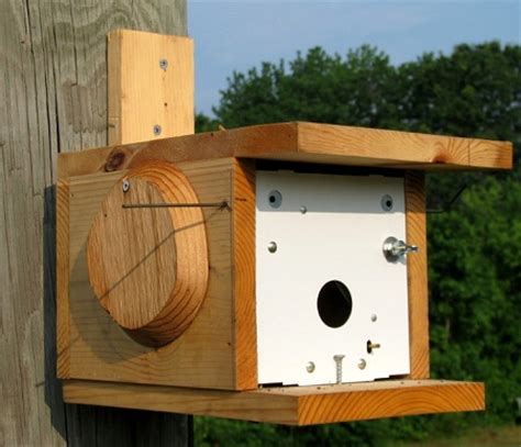 house sparrow trap plans house sparrow trap plans sparrow trap plans insect nic