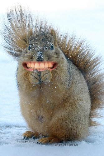 animals dont  human teeth  poke