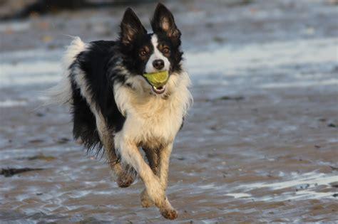 are dogs mammals isle of wight nature showcase rod fisher mammals