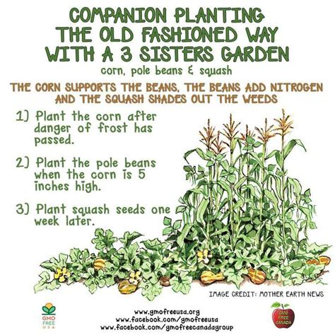 48 Best Gardening Companion Planting Images On Pinterest Companion Vegetable Garden Layout