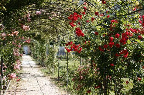 maggio in fiore maggio e le in fiore a s ter