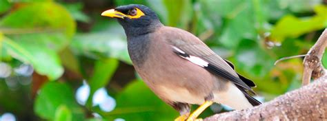 native or not hawaiian birds aren t always what they seem