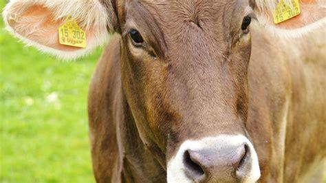 alimentazione animale alimentazione animale il futuro dipende da sottoprodotti