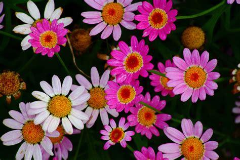 file pretty flowers virginia forestwander jpg