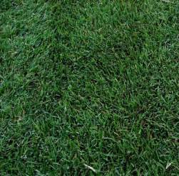 5 best grass types for arizona lawns