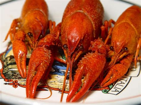 Sleeping With The Crawfish free pictures animal 9576 images found