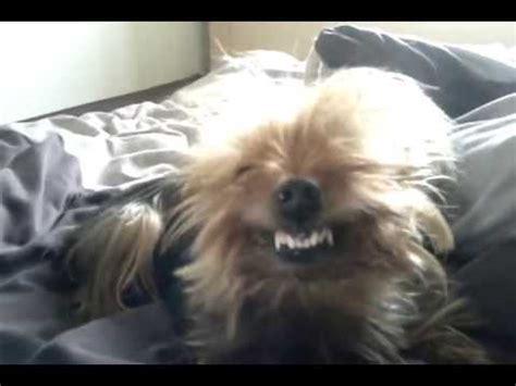can dogs laugh bono the singing funnydog tv