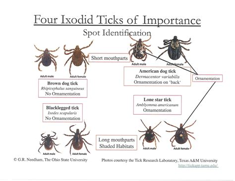 american tick diseases grassy branch farm may is lyme disease awareness month