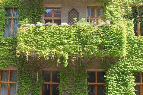 Pflanzen Am Balkon 3396 by Pflanzen Am Balkon Csis Tagliabuana Klettertrompete