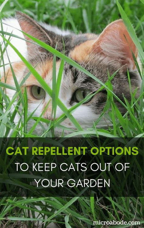 9 Things To Keep Away From Your by Cat Repellent Options To Keep Cats Out Of Your Garden
